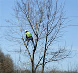 Fort Worth Tree Trimming Services